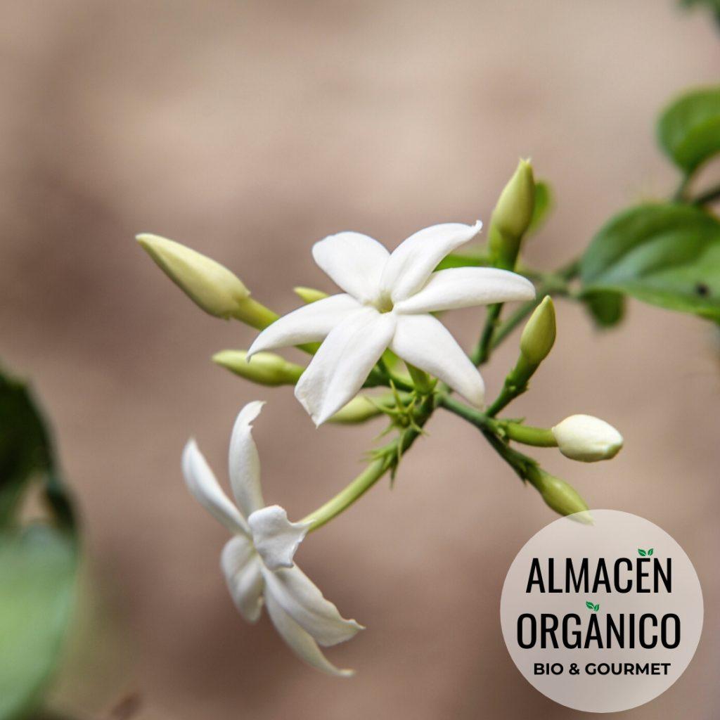 flor de jazmin