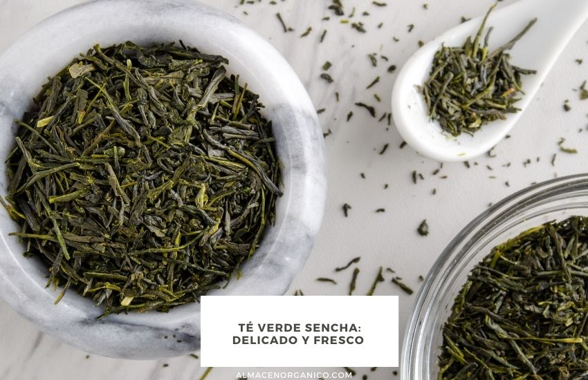té-verde-sencha-ecologico